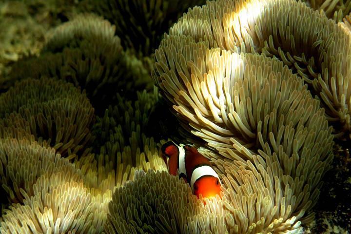 Fauna sottomarina