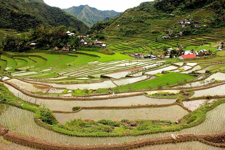 Terrazze di riso