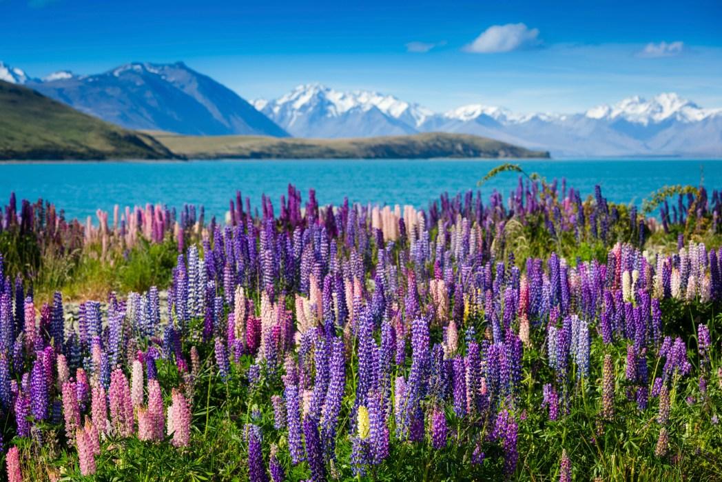 Grandi viaggi low cost: Nuova Zelanda, Lago Tekapo