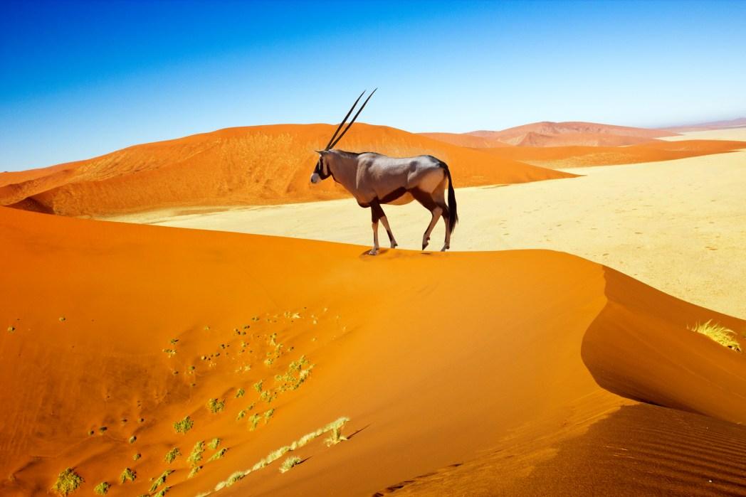 Deserto della Namibia, informazioni