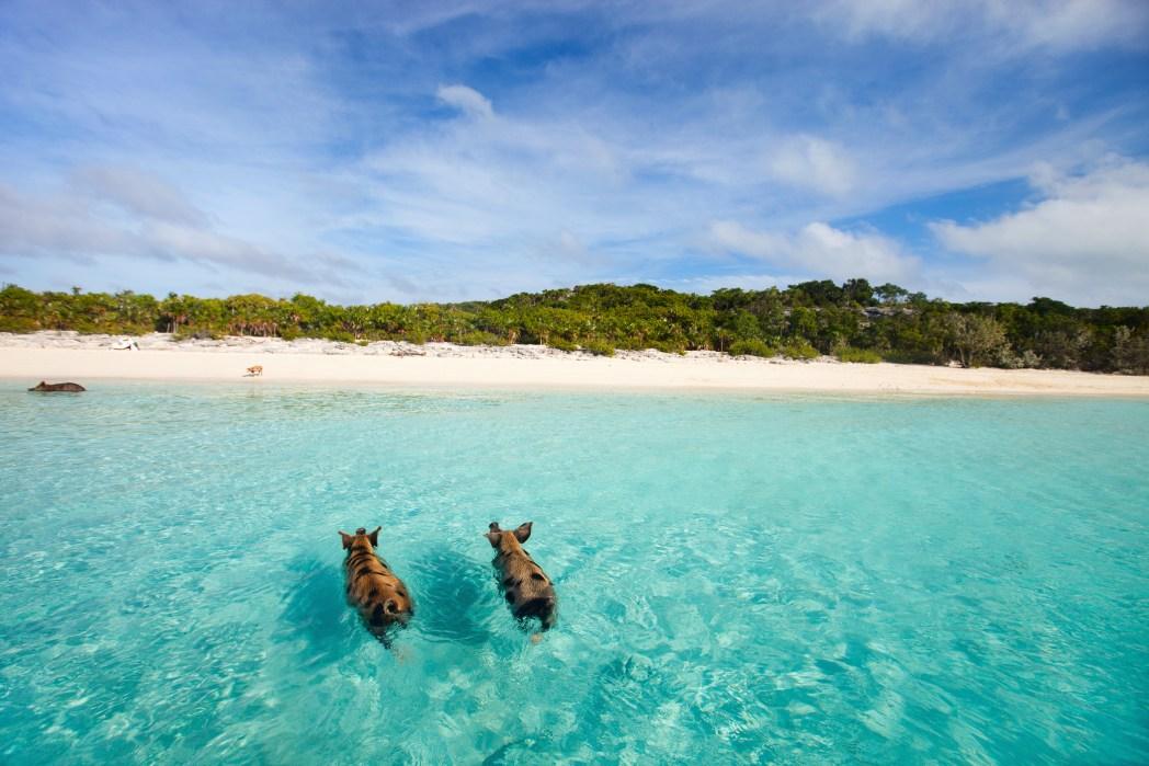 Le 15 Isole Più Belle Dei Caraibi Skyscanner Italia