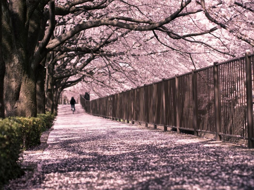 Viaggio in Giappone: quando andare