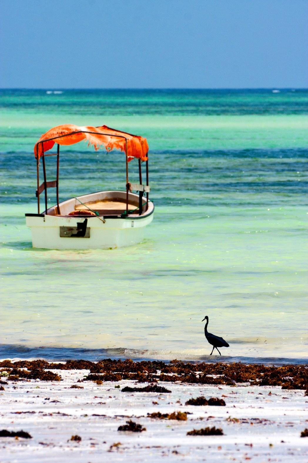 Quando Andare A Zanzibar E Cosa Vedere Per Una Vacanza Unica