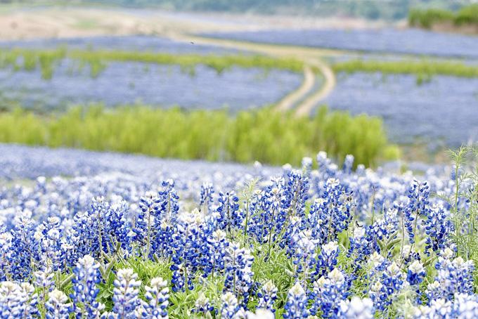 America Texas Hill Country Bluebonnet Tour