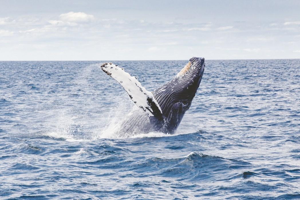 Argentina, viaggio in Patagonia - balena nella Penisola di Valdés