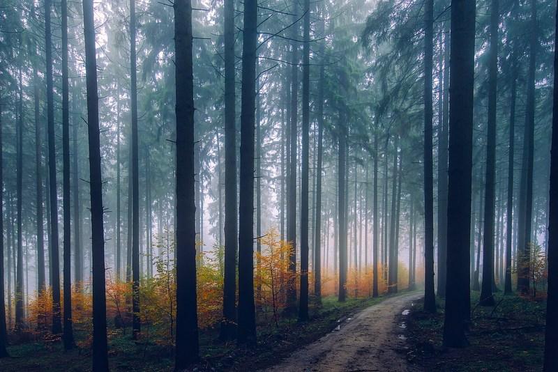 I posti più belli del mondo: Foresta Nera