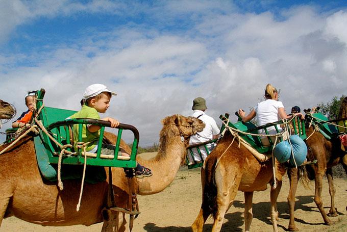 Un giro sui cammelli