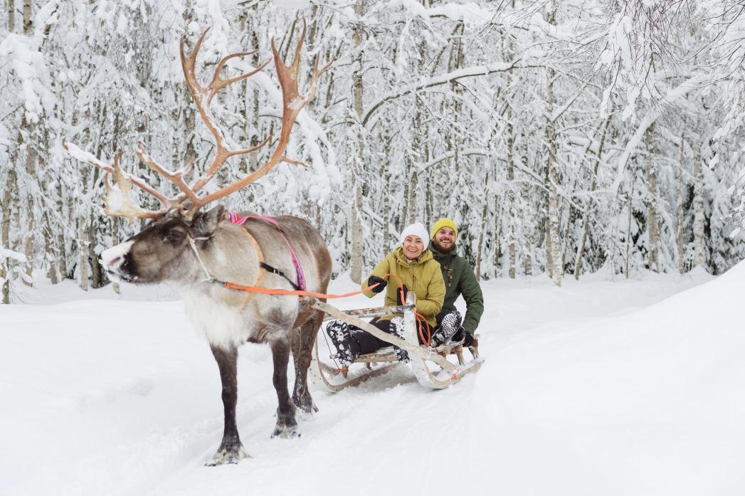 Escursione con le renne, Lapponia