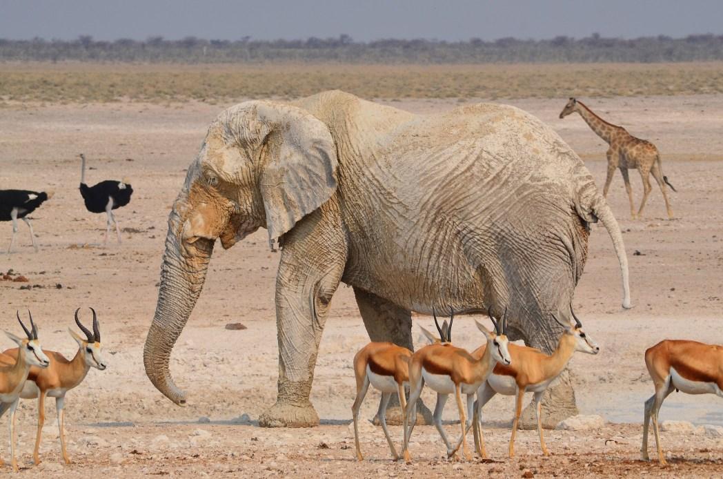 Safari in Africa - animali nell'Etosha National Park