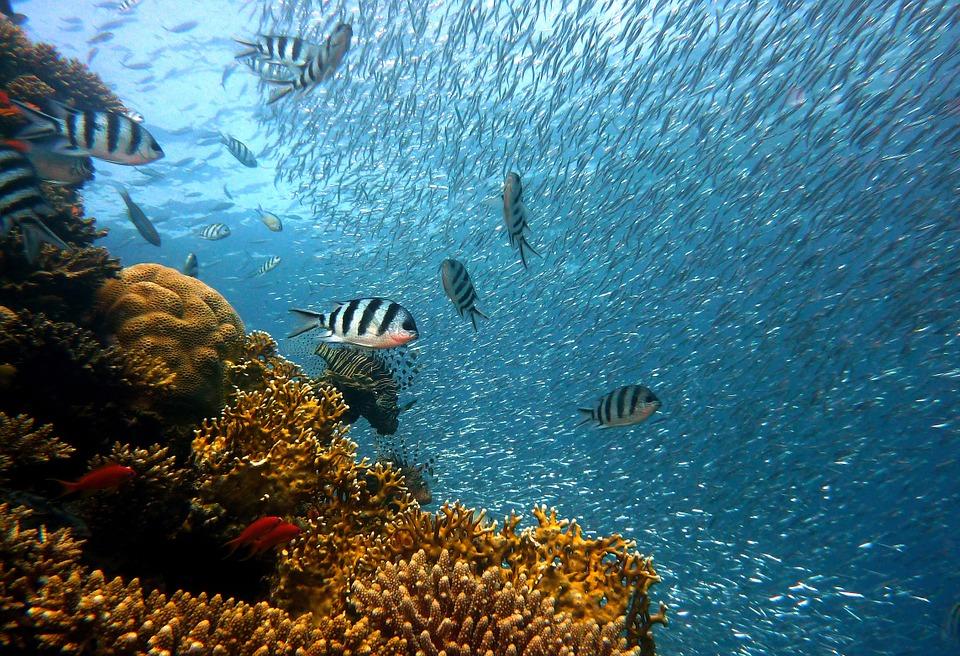 Tesori sotto l'acqua