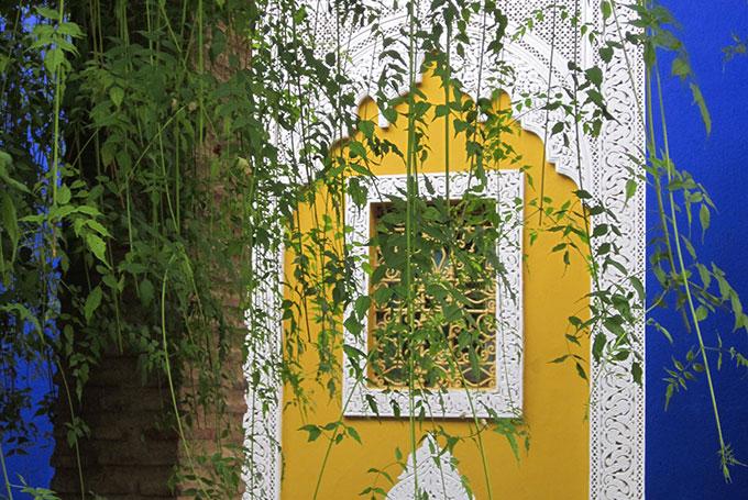 Jardin Majorelle, Marrakech © Lewis Packwood