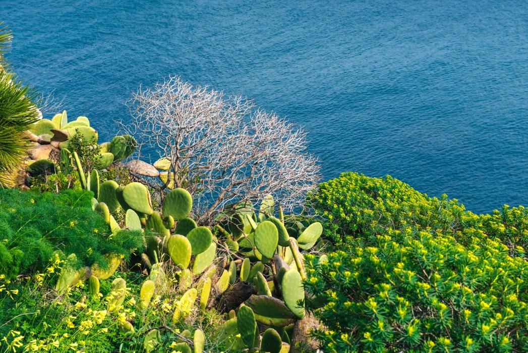 Un fiore a strapiombo sul mare di Salina
