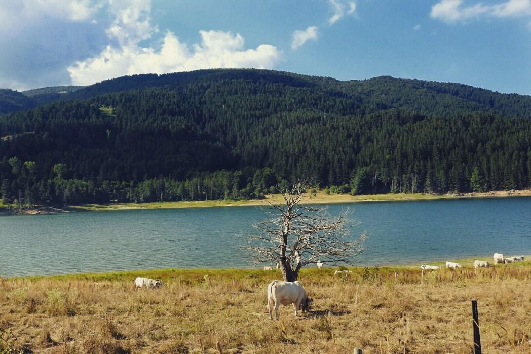 Parco Nazionale della Sila Calabria