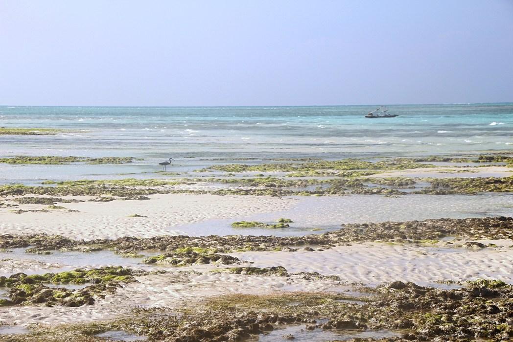 Quando andare a zanzibar e cosa vedere per una vacanza - Zanzibar medicine da portare ...